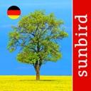 Baum Id Deutschland – Naturführer zur Bestimmung aller ...