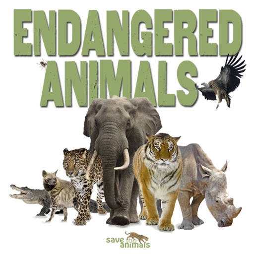 animals and birds as our friends