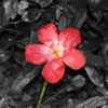 Color Splash Photo Editor App
