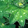Heilkräuter aus der Natur
