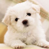 Cute Dog & Puppies Wallpaper | Backgrounds