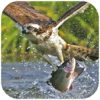 download Sea Eagle Survival : Open Water Fish Hunting