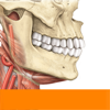 Sobotta Anatomie Atlas Gratis