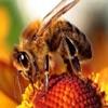Hidden Bees