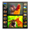 Photo Movie Pro - Slideshow Video DVD