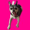 Sticker Pets App
