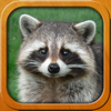 Kids learn about Animals, Birds and Pets, full app