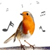 Bird Calls and Sounds Ringtones Free humorous cell phone ringtones