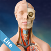 Anatomy Game Lite