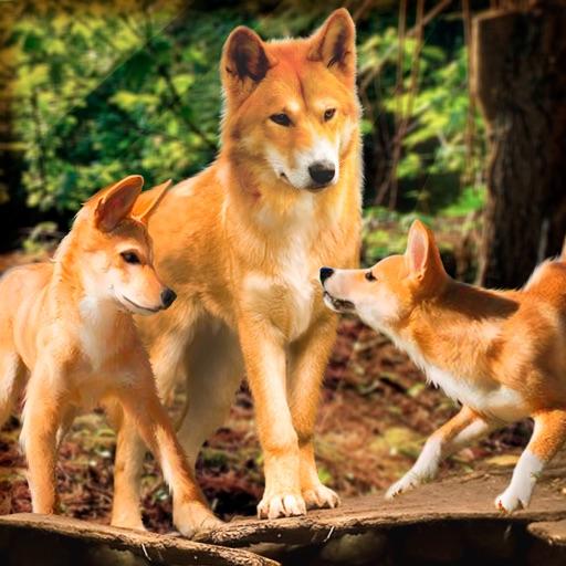 Wild Dingo Dog Survival Simulator 3D iOS App