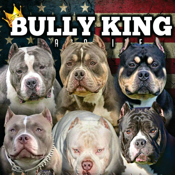 Bully King Magazine app review