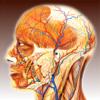 Anatomical Glossary