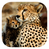 Stuarts' African Mammals
