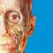 Atlas der menschlichen Anatomie Edition 2017