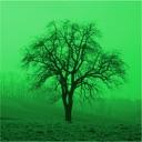Baumbestimmung 2.0