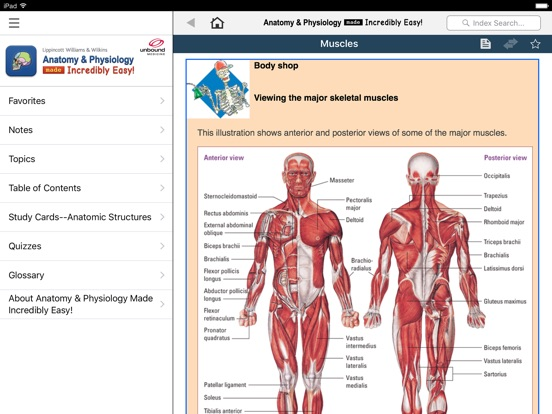 Anatomy And Physiology Quiz PDF Download 8861848 - salonurody.info