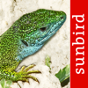 Reptile Id - UK Field Guide