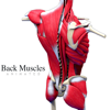 Back Muscles Animated