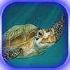 Rescuer Turtle