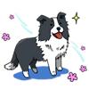 Vu Quoc Hung - Cute Border Collie Dog Sticker  artwork
