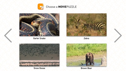 MoviePuzzles – Wild Animals screenshot 4