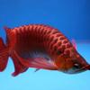 MY FISH by AppsVillage