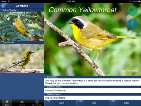 Cómo los árboles urbanos ayudan a las aves migratorias | Blog de DeepRoot