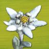 Alpenblumen Finder – Blumen der Alpen bestimmen