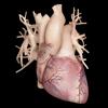 Cardiological