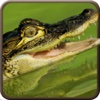 American Alligator Black Water Attack Shoot Pro