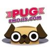 Duchess the Pug