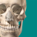 Skeleton Anatomy Atlas: Essential Reference