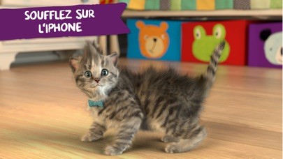 download Little Kitten - mon chat préféré apps 2