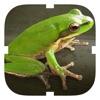Frog Croaker