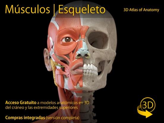 Músculos   Esqueleto - 3D Atlas de Anatomía Por Catfish Animation ...
