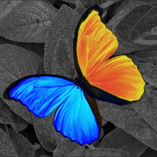PhotoWizard Lite - Photo Editor iOS App
