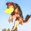 Different Sport - Movie Dog