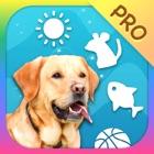 Dog Toy Pro - Jouets et jeux pour chiens icon