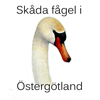 Skåda fågel i Östergötland