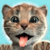Little Kitten Adventures