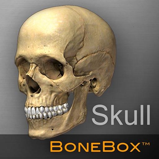 【医疗助手】骨架盒:头骨查看助手
