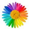 DivaFlora - доставка цветов