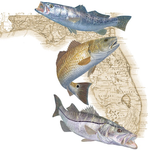 Florida fishing regulations per progress technologies inc for Florida fishing regs
