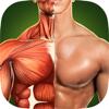 Human Anatomy 3D: Bodybuilding