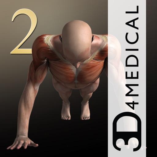 【3D健身】肌肉2HD