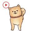Shiba Dog Animated Stickers Wiki