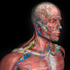 Introdução Anatomia Humana 3D