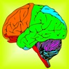 Brain & Nerves: The Human Nervous System Anatomy
