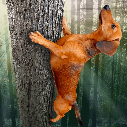 Wild Wiener! for iPad