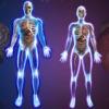 Exámenes del Cuerpo Humano